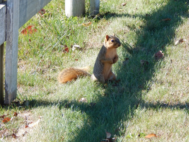 Mr. Squirrel Nutty